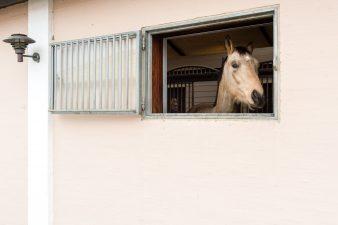 Stallfönster til häststall